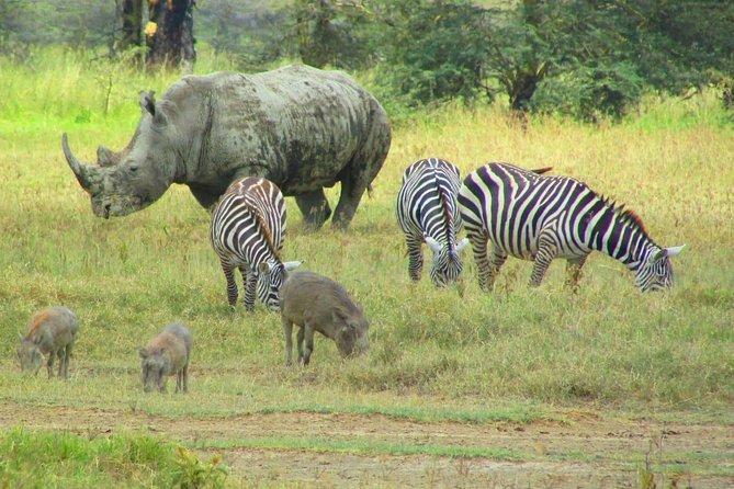 8 Days Safari to Lake Nakuru N/P, Maasai Mara N/R, Serengeti N/P, Ngorongoro.