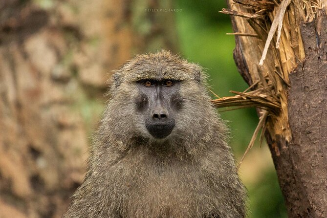 8 Days Safari to Amboseli N/P Tarangire N/P Serengeti N/P Ngorongoro, Manyara.