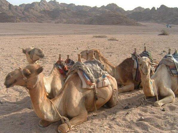 Egyptian Desert Tours from Sharm el Sheikh