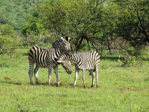 Wildlife Safari Tours from Johannesburg