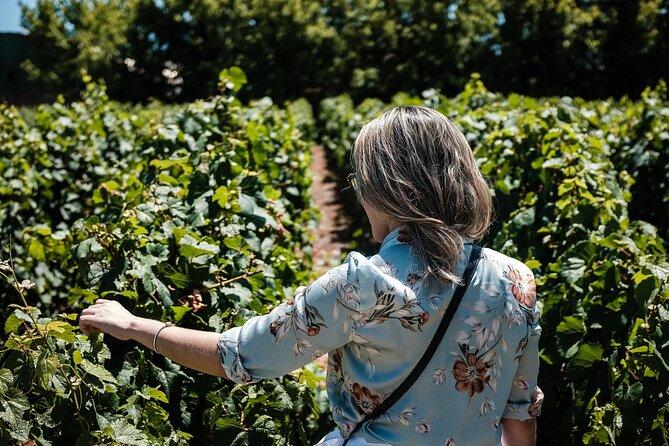 Wine Lover's Guide to Mendoza