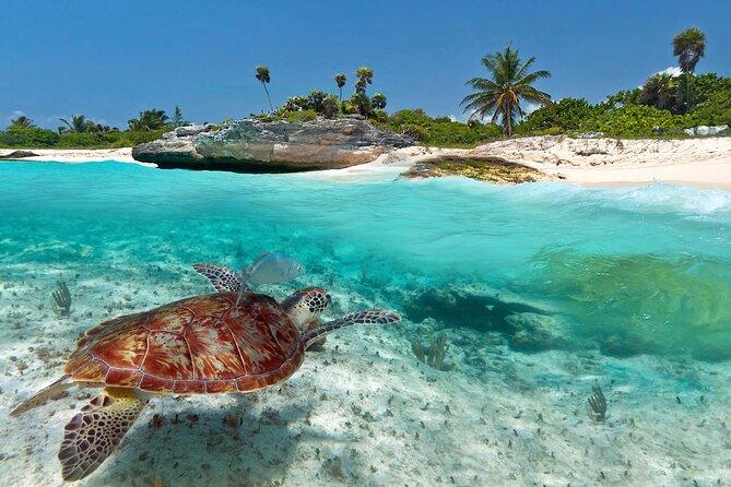 Sea Life Encounters in Grand Cayman