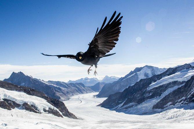 Swiss Alps Adventures from Zurich