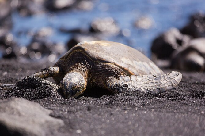 Where to See Turtles on the Big Island of Hawaii