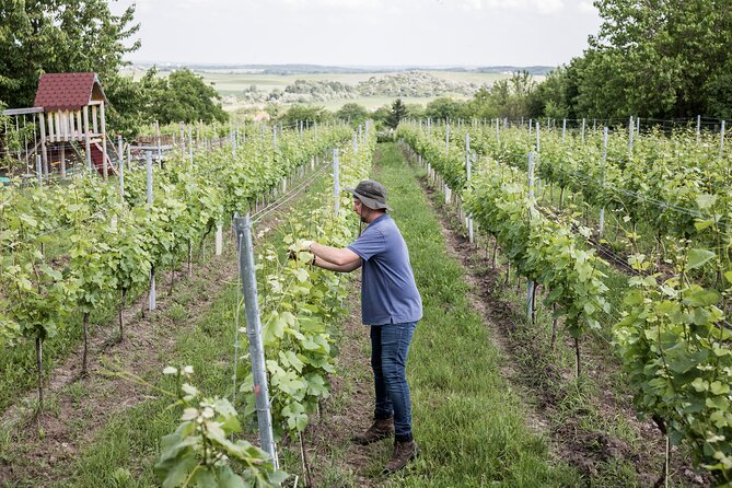 Wine Tasting in Budapest