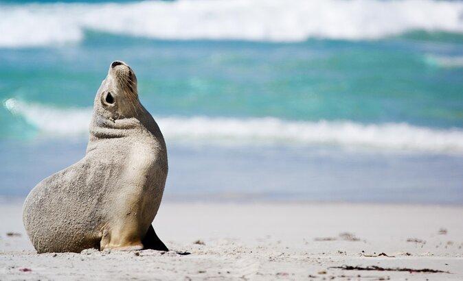 Where to See Wildlife on Kangaroo Island