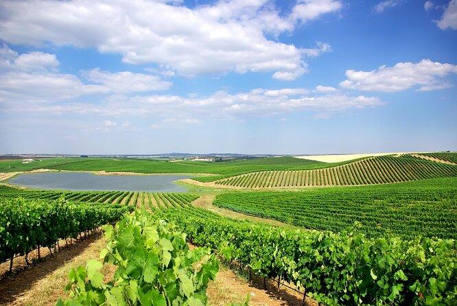 Alentejo Wine Tours From Lisbon