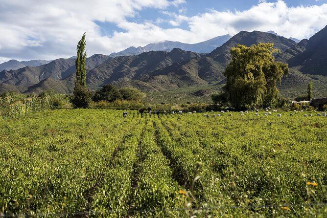 Wine Lover's Guide to Salta