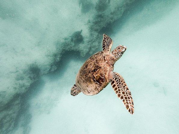Sealife Encounters in Oahu