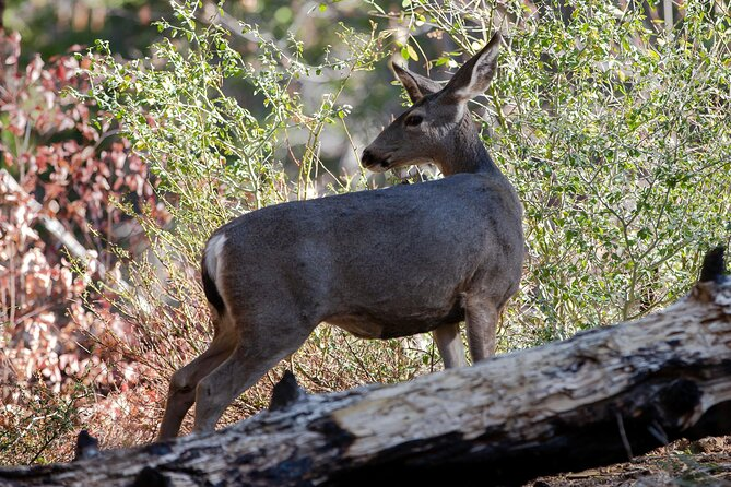 How to Spot Wildlife in Yosemite