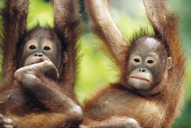 Where to See Wildlife in Kuching