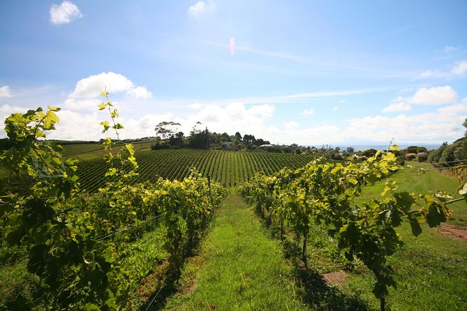 Wine Lover's Guide to Auckland