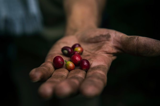 Colombian Coffee Tours in Medellín
