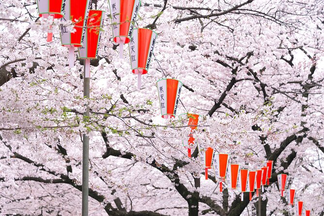 How to Experience Cherry Blossom Season in Tokyo
