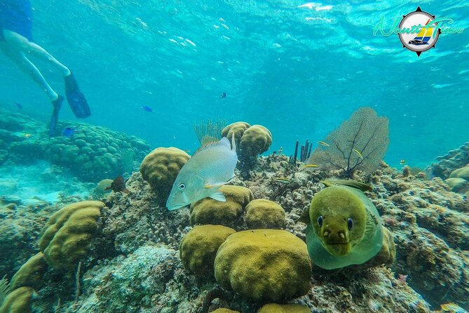 Full-Day Snorkeling at Hol Chan - Not for Cruise Ship Guests