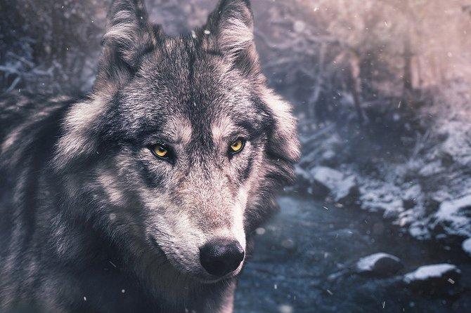 Search 4 The Story Alaska- Worlds First Doc Filmmaking Scavenger Hunt