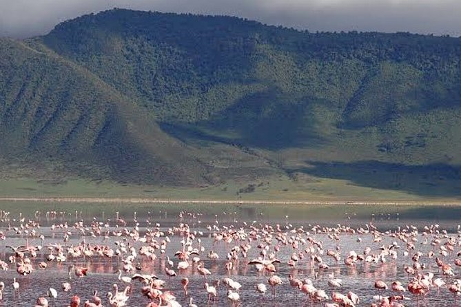 7-Day Lake Manyara Serengeti and Ngorongoro Safari with Meals