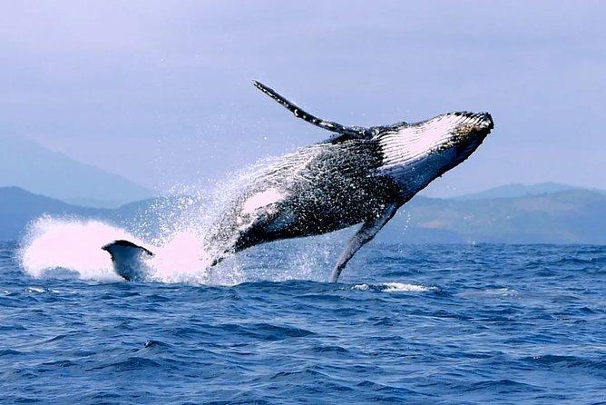 Humpback whale watching