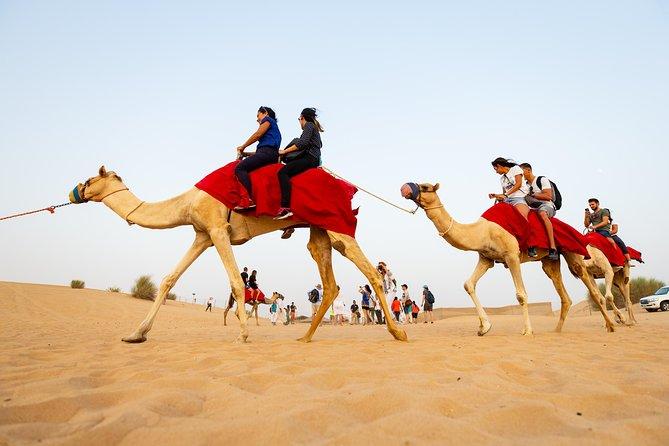 Desert Experiences from Abu Dhabi
