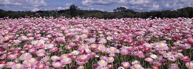 How to Experience Wildflower Season in Western Australia