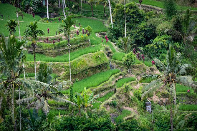 How to Spend 1 Day in Ubud