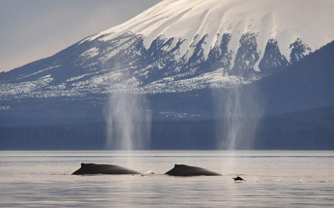 How to Spot Wildlife in Sitka