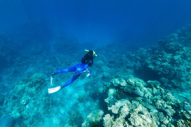 Great Barrier Reef Tours from Townsville