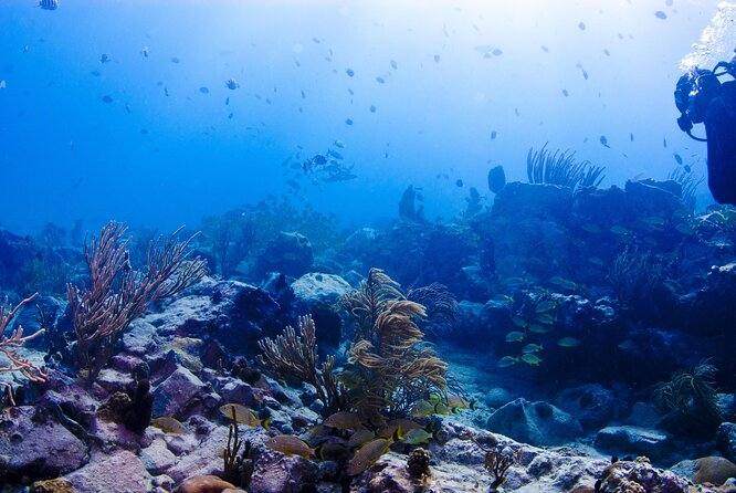Top Diving Spots in Grand Case