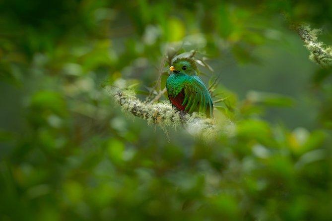 Where to Go Bird-Watching in Costa Rica