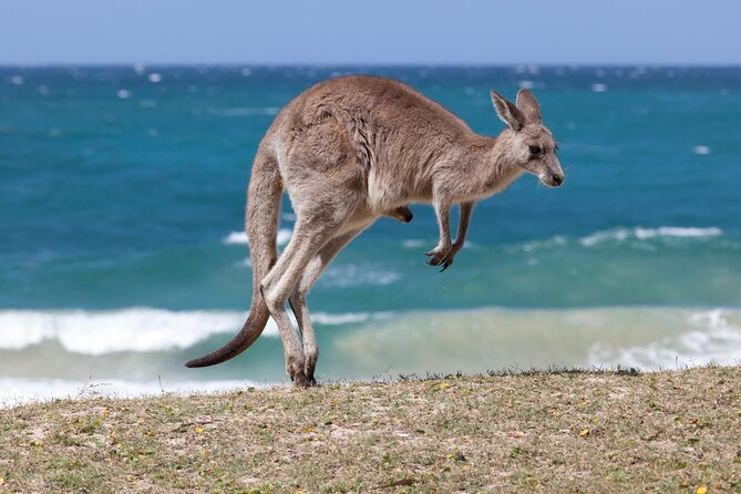 Don't Miss These Must-Do Activities in South Australia
