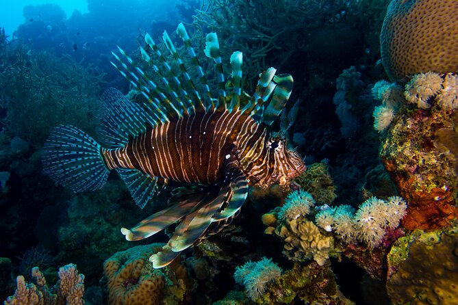 Top Snorkeling and Scuba Diving Spots in Dahab