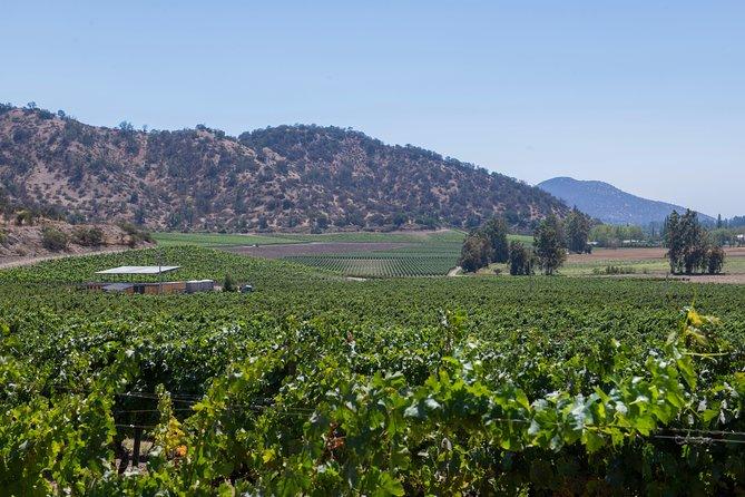 Top Wineries Near Santiago