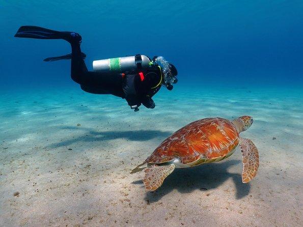 How to Spend 1 Day in Bonaire