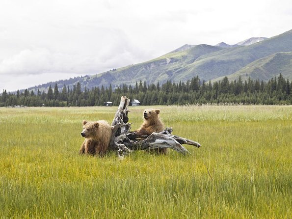 How to Spend 3 Days in Denali National Park