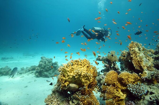 Top Diving Spots in Sharm El Sheikh for Beginner Scuba Divers