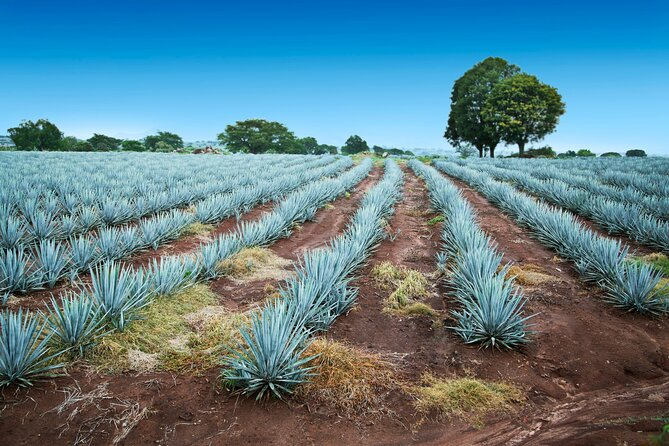 How to Spend 2 Days in Guadalajara
