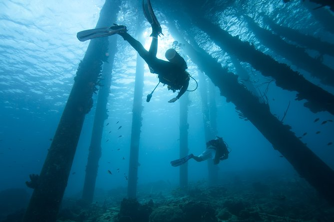 Top Snorkeling and Scuba Diving Spots in Bonaire for Beginners