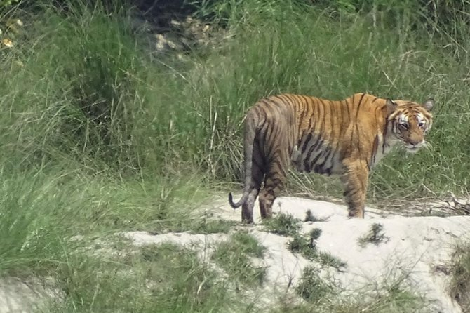 5 Days Bardia National Park Tour with Palpa Overnight Stay