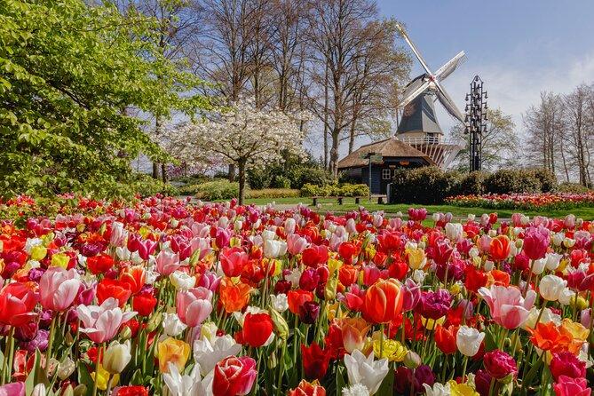 Private Tour in Rotterdam & Keukenhof Tulip Gardens | Max 6 travelers