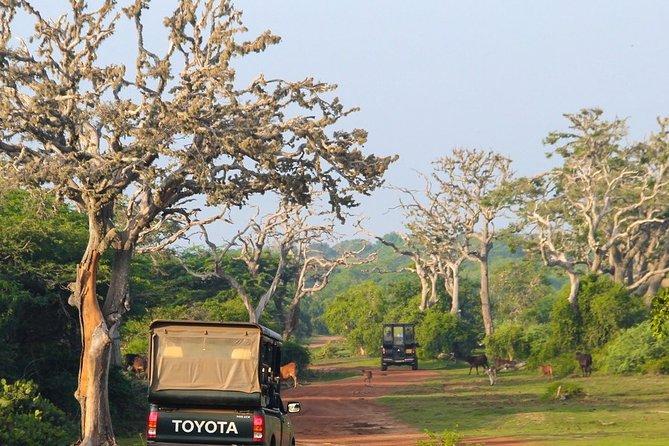 Bundala National Park Safari from Mirissa