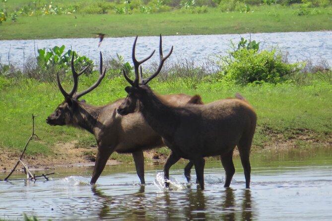 Yala National Park Safari from Galle