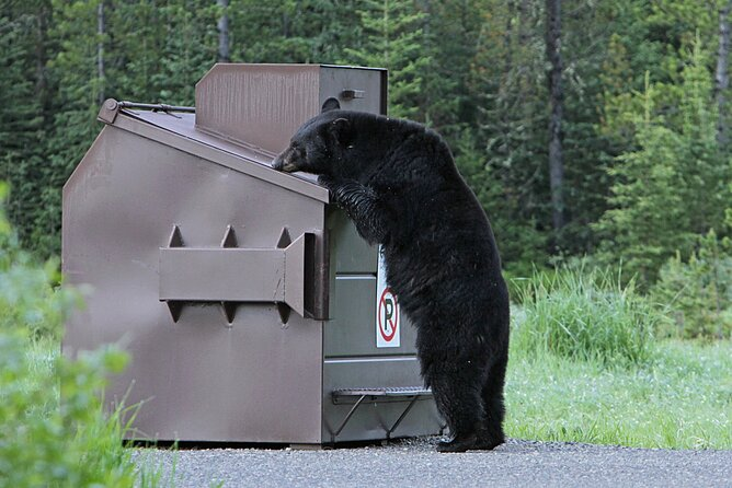 Dont get too close to the bears! No bear interviews allowed!