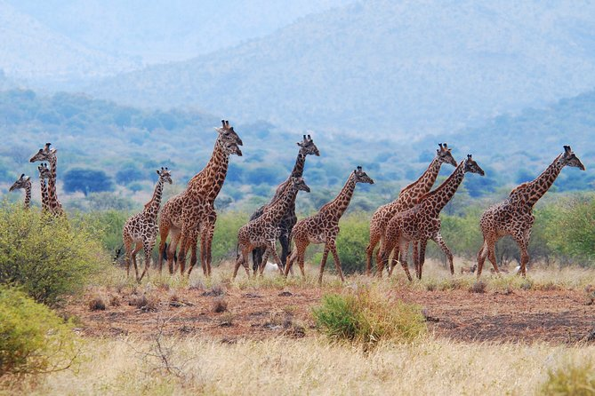 How to Spend 2 Days in Arusha