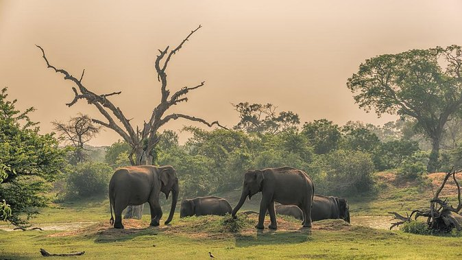How to Spend 3 Days in Yala National Park