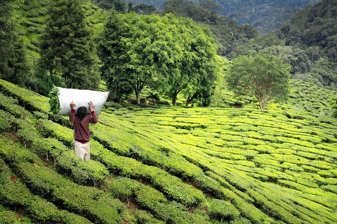 How to Spend 1 Day in Darjeeling