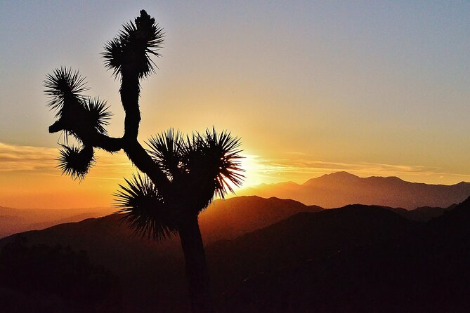 Search 4 The Story Joshua Tree- Worlds First Doc Filmmaking School ScavengerHunt
