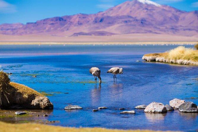 Piedras Rojas Trekking in Atacama