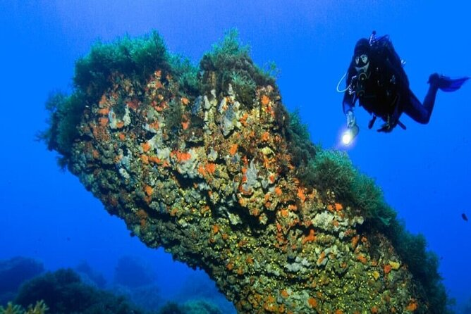 """Professional diving course"" for 4 days of amazing sea life"
