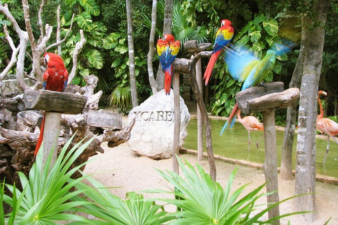 Xcaret Plus Tour Full Day from Cancun
