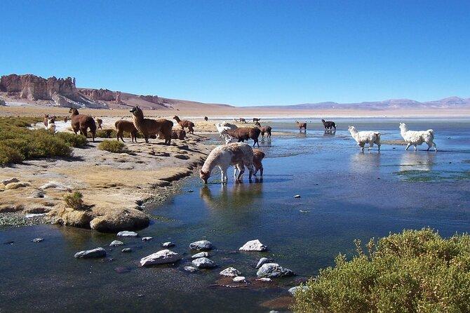 Tara Salt Flat in Atacama